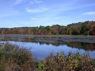 October 8, 2008 beaver ponds 007